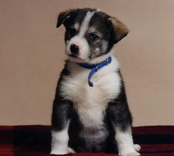 Wolfie as a puppy